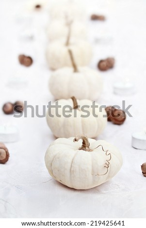 Beautiful table decorations of white pumpkins in a row. Extreme shallow depth of field.