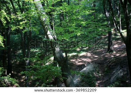Beautiful tall strong green fresh trees plant foliage in summer forest splendid landscape picturesque scenery relaxation beauty of nature outdoor on natural background, horizontal picture - stock photo