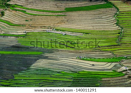Beautiful terraced rice field in water season in Laocai province, Vietnam