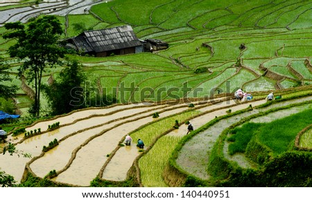 Beautiful terraced rice field landscape in water season in Sapa, Lao cai province, Vietnam