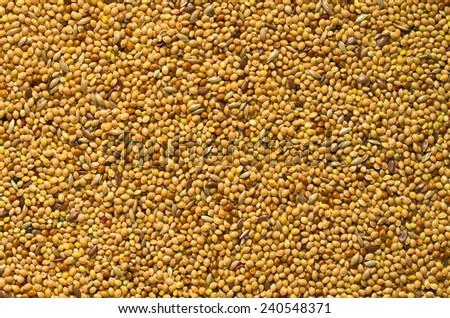 beautiful texture of bright yellow ripe seed - stock photo