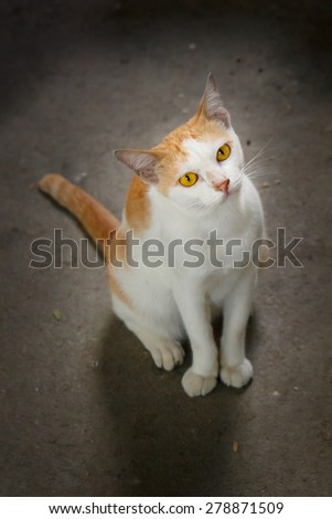 beautiful thai stray cat laying at temple. - stock photo