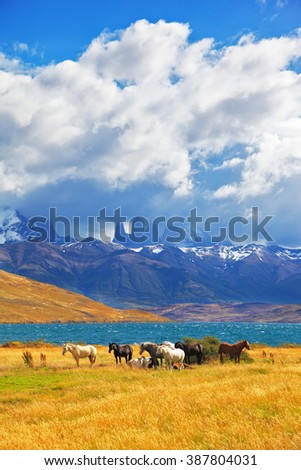 Beautiful thoroughbred horse grazing in a meadow near the lake. On the horizon, towering cliffs Torres del Paine - stock photo