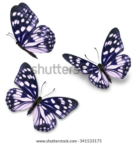 Beautiful three blue and white butterfy isolated on white background