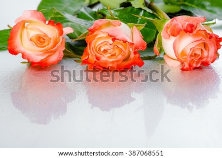 beautiful three pink rose flowers on light background with drops, close up - stock photo
