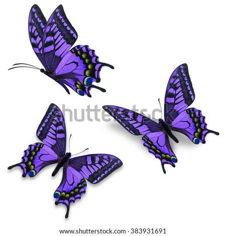Beautiful three purple butterfly flying, isolated on white background - stock photo