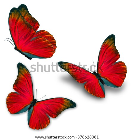 Beautiful three red butterfly flying, isolated on white background - stock photo