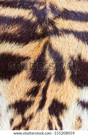 beautiful tiger fur - colorful texture with orange, beige, yellow - stock photo