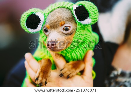 Beautiful Tiny Chihuahua Dog Dressed Up In Frog Outfit, Staying Outdoor In Spring - stock photo