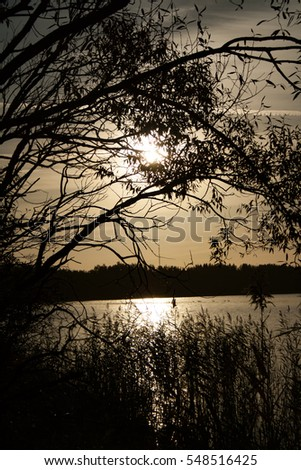 Beautiful town landscape tree branches through which seeps sun at sunrise on the background of the lake. / Thin wooden branches at dawn. / Lake Naroch, Belarus