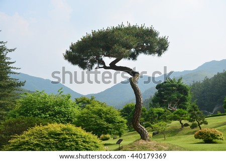 Beautiful tree in the garden - stock photo