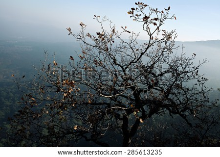 Beautiful tree in the mountains, Crimean mountains - stock photo