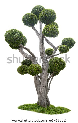 beautiful Tree isolated against a white background - stock photo