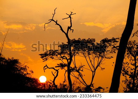 Beautiful tree silhouette and sun at the sunset time  - stock photo