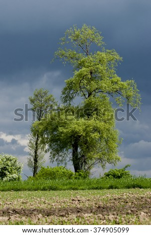 Beautiful  Tree Stands in a Plowed Fiel  an afternoon spring time - stock photo
