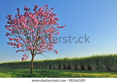 beautiful tree with pink flowers - stock photo