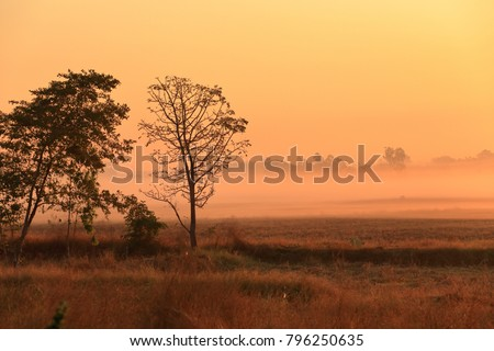 Beautiful trees and natural fields