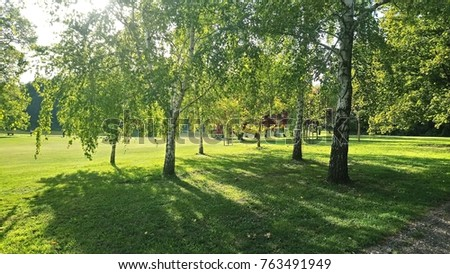 Beautiful trees in a park