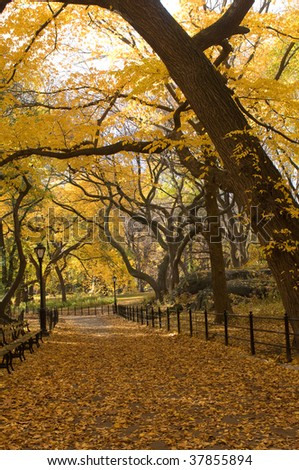 Beautiful trees in Central Park with leaves changing colors in the fall