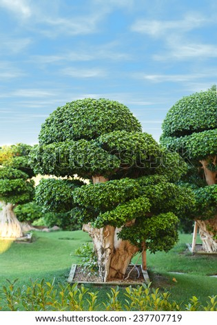 Beautiful trees in park - stock photo