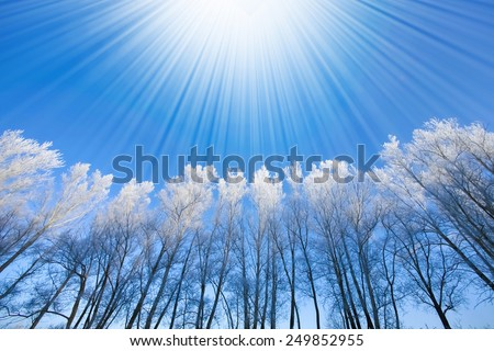 Beautiful trees in white frost on the background of blue sky - stock photo