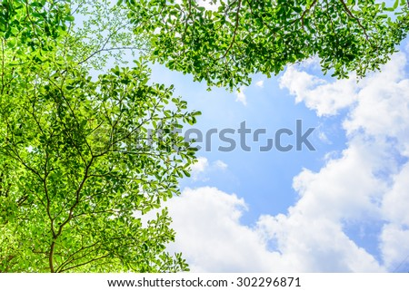 Beautiful trees on sky background - stock photo