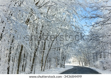 Beautiful trees with snow clinging to the branches against a bright blue sky. - stock photo
