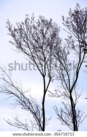 Beautiful Trees without leaves.