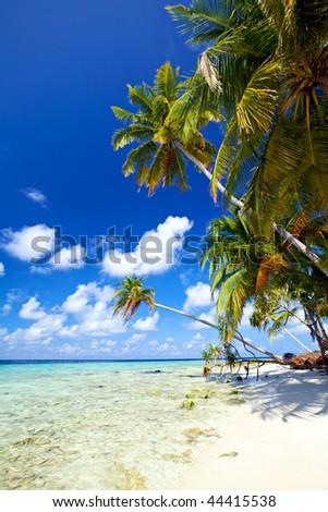Beautiful tropical beach! - stock photo