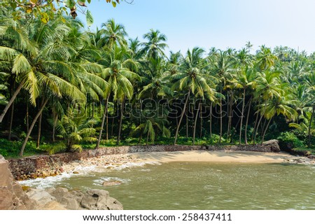 Beautiful tropical beach resort in India. Surrounded by coconut palm trees