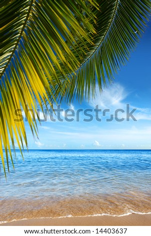 Beautiful tropical beach with clear ocean and palm trees - stock photo