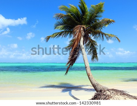 Beautiful tropical beach with coconut palm and blue sky. The picture was taken at the Bavaro beach, Punta Cana, Dominican Republic