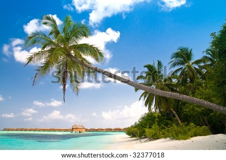 beautiful tropical beach with coconut palm tree reaching over the turquoise ocean