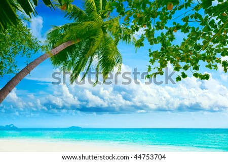 Beautiful tropical beach with palmtree on foreground - stock photo