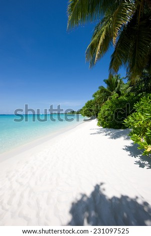 Beautiful tropical beach with trees in the Maldives