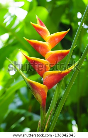 Beautiful tropical flower (heliconia) - stock photo