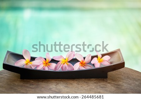Beautiful tropical frangipani flower over blue background  - stock photo