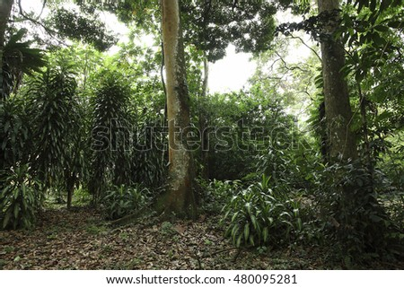 Beautiful Tropical garden summer landscape with green colors