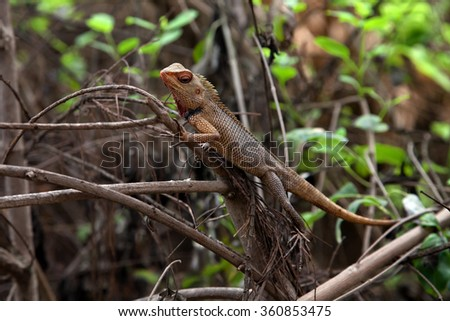 Beautiful tropical lizard on the branches of bush - stock photo