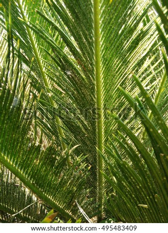 Beautiful tropical palm leaf backlit with sunlight shining through