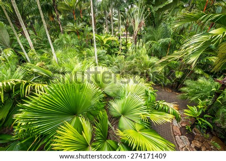 Beautiful tropical palm tree in the natural garden for botany travel - stock photo