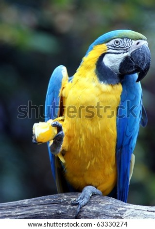 beautiful tropical parrot closeup - stock photo
