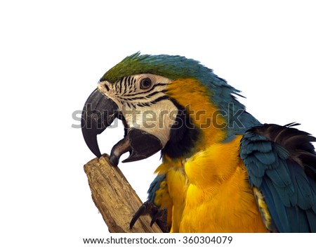 Beautiful tropical parrot isolated - stock photo