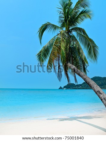 beautiful tropical seascape with palm tree - stock photo