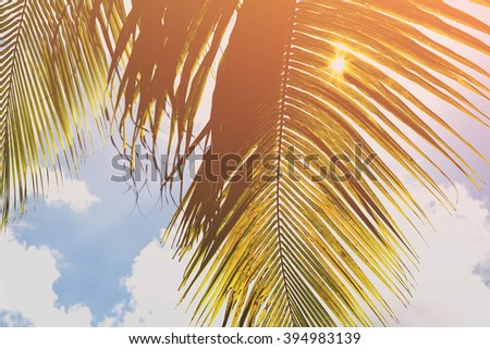 Beautiful tropical sunset with palm trees at beach, background - stock photo