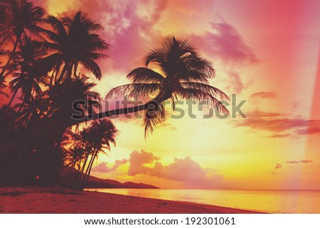 Beautiful tropical sunset with palm trees silhouette at beach, retro stylized - stock photo