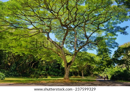 Beautiful tropical tree in Waimea Valley park on Oahu island - stock photo