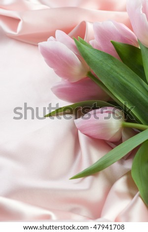 Beautiful Tulip and Silk.With copy space