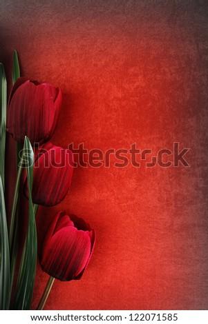 Beautiful tulip flowers on vintage background - stock photo