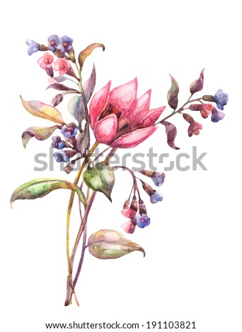 Beautiful Tulip with Spring Flowers . Watercolor illustration.